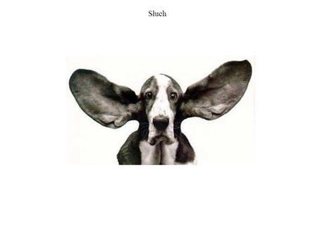 Słuch. Dźwięki Zakres słyszalnych dźwięków u wybranych zwierząt.