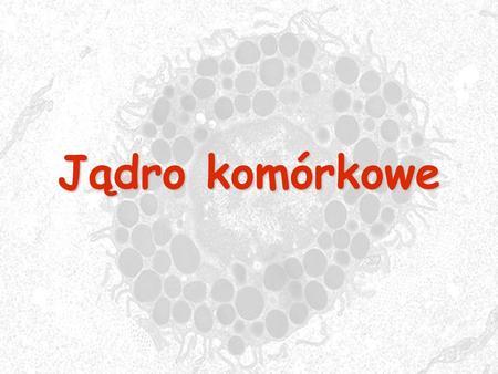 Jądro komórkowe. zawiera główny zasób informacji genetycznej zawiera główny zasób informacji genetycznej oddzielone od protoplazmy otoczką jądrową złożoną