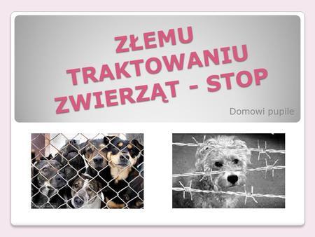 ZŁEMU TRAKTOWANIU ZWIERZĄT - STOP Domowi pupile. SCHRONISKA W schroniskach znajduje się mnóstwo zwierząt bez domu. Większość ludzi kupuje psy i koty w.