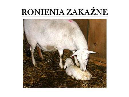 RONIENIA ZAKA Ź NE. Enzootyczne ronienie owiec Inne nazwy: ( ł ac.) abortus enzooticus ovium (ang.) enzootic ovine abortion (ang.) enzootic abortion.