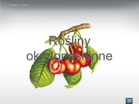 Rośliny okrytonasienne TEMAT LEKCJI. Budowa kwiatu ROŚLINY OKRYTONASIENNE płatek korony działka kielicha dno kwiatowe słupek pręcik.