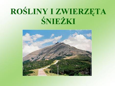 ROŚLINY I ZWIERZĘTA ŚNIEŻKI. Flora Karkonoszy jest przejściowa między górami Europy Zachodniej i Karpatami Zachodnimi. O ogromnej wartości flory Karkonoszy.