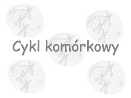 Cykl komórkowy. Cykl komórkowy jest szeregiem zmian biofizycznych i biochemicznych komórki, zachodzących między końcem jednego i końcem następnego podziału.