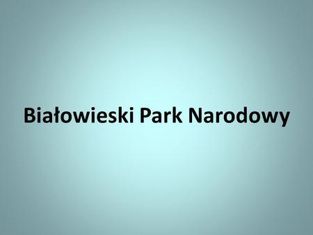 Białowieski Park Narodowy. Symbolem parku jest żubr.
