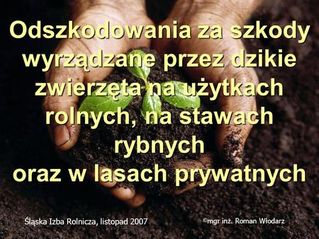 Odszkodowania za szkody wyrządzane przez dzikie zwierzęta na użytkach rolnych, na stawach rybnych oraz w lasach prywatnych Śląska Izba Rolnicza, listopad.