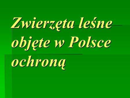 Zwierzęta leśne objęte w Polsce ochroną. Ssaki Wiewiórka Ubarwienie wiewiórki jest różne, od barwy rudej po czarno-brunatną, spód ciała biały. Charakterystyczną