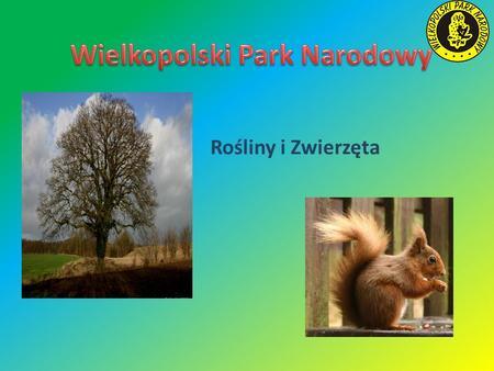 Rośliny i Zwierzęta. Zwierzęta Wielkopolskiego Parku Narodowego Zwierząt w Parku Narodowym jest bardzo wiele. Występuje tam dużo ssaków, ptaków, ryb,