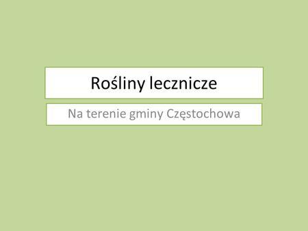 Rośliny lecznicze Na terenie gminy Częstochowa. Rośliny były zbierane przez : Od lewej Paweł Jakubasz Wojciech Bojanowicz Radosław Szwej Fotograf Andrzej.