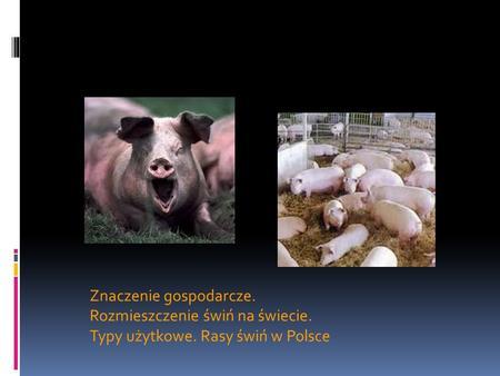 Znaczenie gospodarcze. Rozmieszczenie świń na świecie. Typy użytkowe. Rasy świń w Polsce.