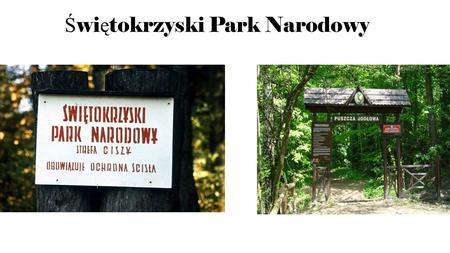 Ś wi ę tokrzyski Park Narodowy. Powstanie Parku Świętokrzyskiego Świętokrzyski Park Narodowy powstał w 1950 roku w celu ochrony rzadkich gatunków roślin.