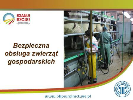 Bezpieczna obsługa zwierząt gospodarskich. 2 Sielski obrazek – krowy na pastwisku. Ale praca ze zwierzętami może być zagrożeniem zdrowia, a nawet życia.